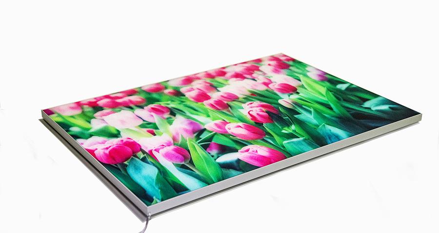 quadro-tulipani-3-acceso-2---Copia1
