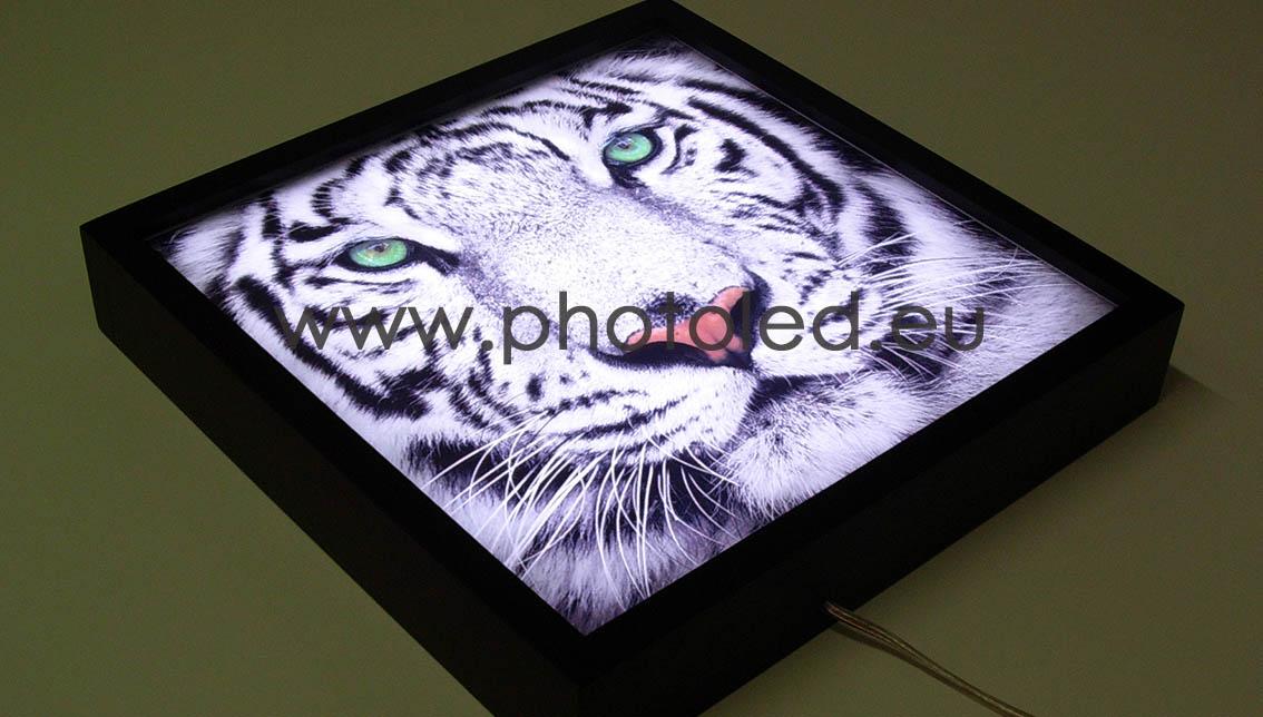 Lightbox Photoled